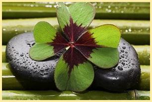 Zen-Meditation Online Fortgeschrittene