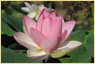 Zen-Meditation Wirkung online