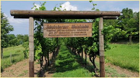 Der Weinlaubengang - Wein vom Kloster
